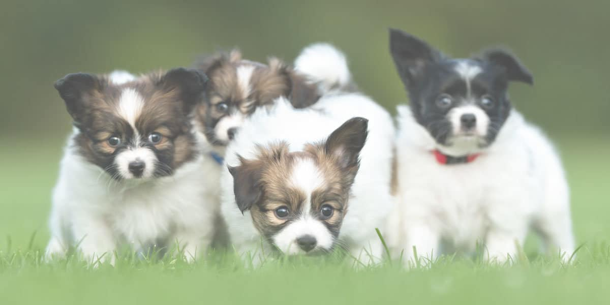 These photos were not the pictures used in the study, but researchers used puppies and bunnies to spark affection among the study's participants.